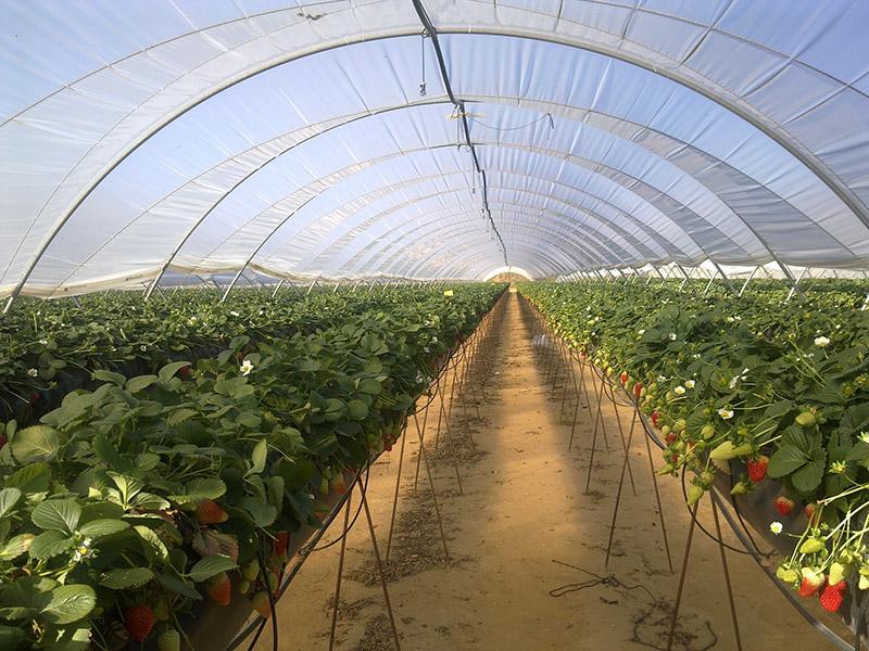 Los melones de la paca ii - 4 4